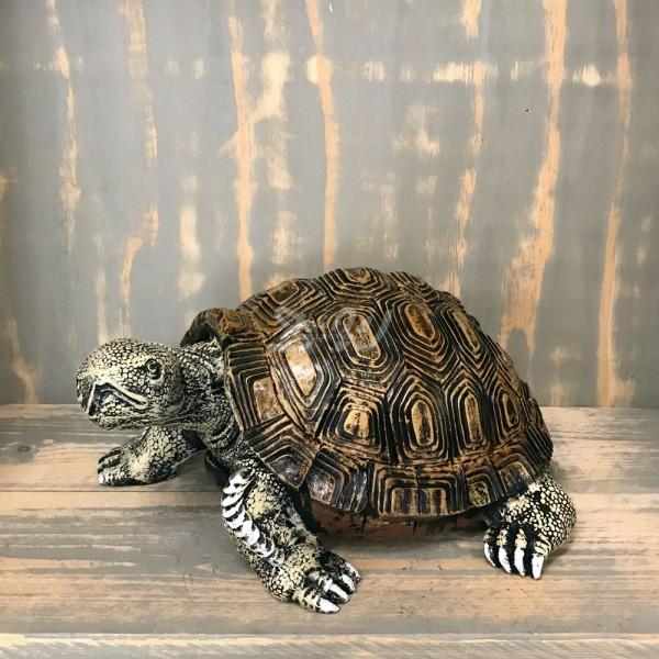 Schildkröte (klein)