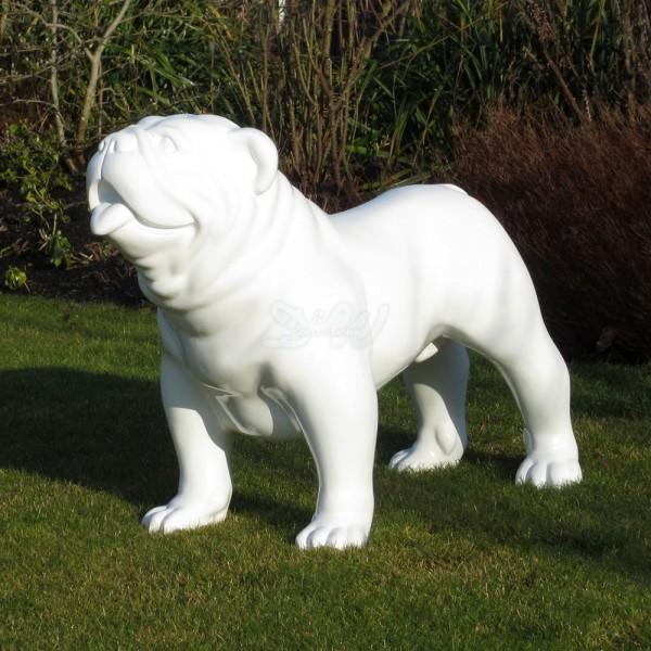 englische Bulldogge Hund weiß (groß)