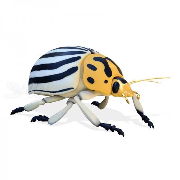 Kartoffelkäfer - Colorado Potato Beetle (riesig)