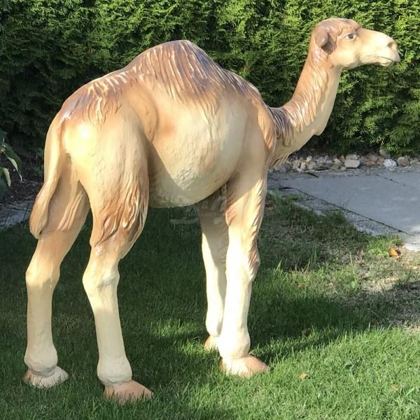 Kamel Dromedar stehend (groß)