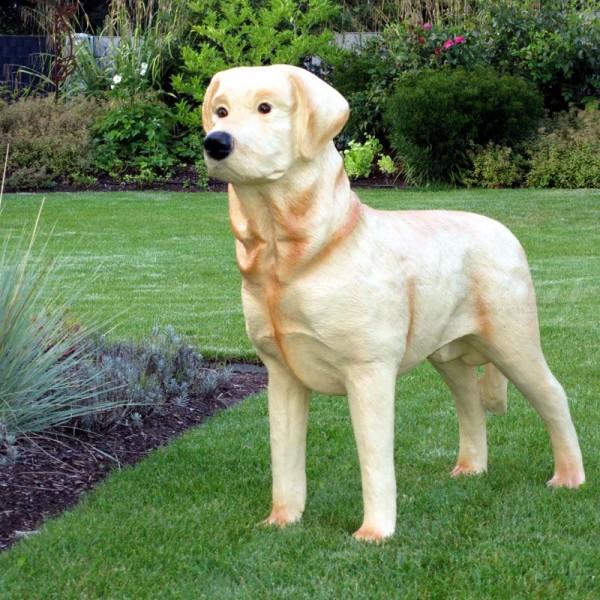 Golden Retriever Labrador Hund stehend hell (lebensgroß)